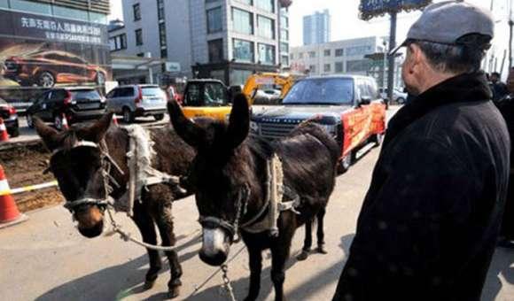 rangerover donkey glo